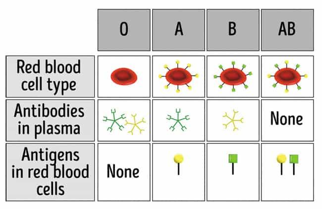 đặc điểm nhóm máu o