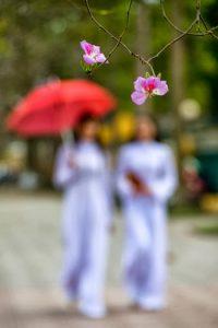 Trịnh Ca - Đóa hoa vô thường 5