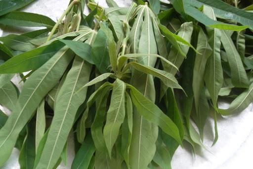 Món canh Rau Sắn của người Phú Thọ có gì đặc biệt ? 7
